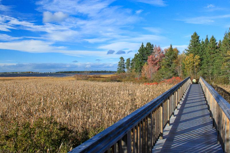 La Réserve naturelle de la Pointe Daly, Photo gracieuseté deHikingnb.ca